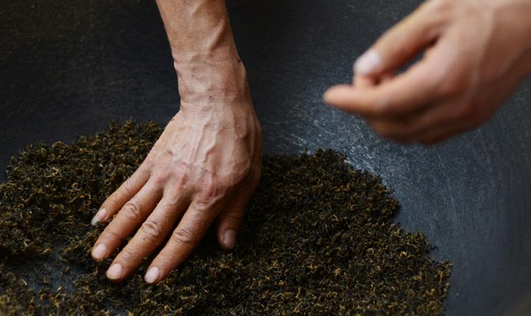 祁门红茶如何采制