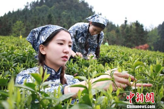 黑茶包括什么茶介绍三种常见的黑茶