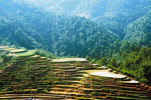 马士成:茶旅结合助推六堡茶产业升级