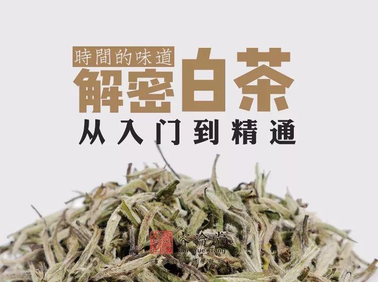 《解密白茶》第三讲:白茶产区——从花开并蒂到全面开花