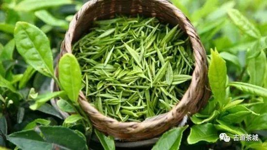 古道茶城|绿茶之美,分秒记于心间!