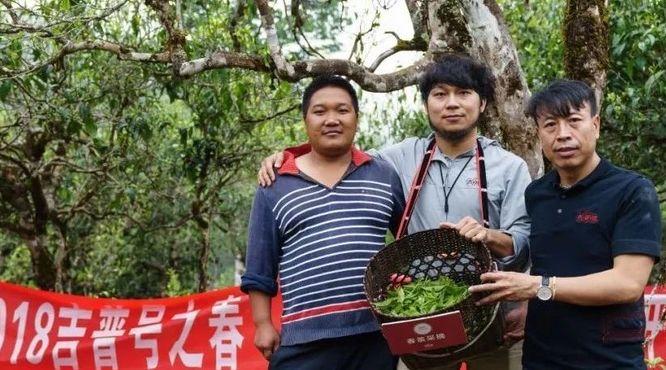 谁给他勇气用易武小产区大树纯料做高端熟普?10年积淀,签约37座古茶山