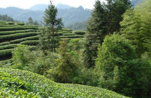 武夷岩茶的生长环境原来这么美!!