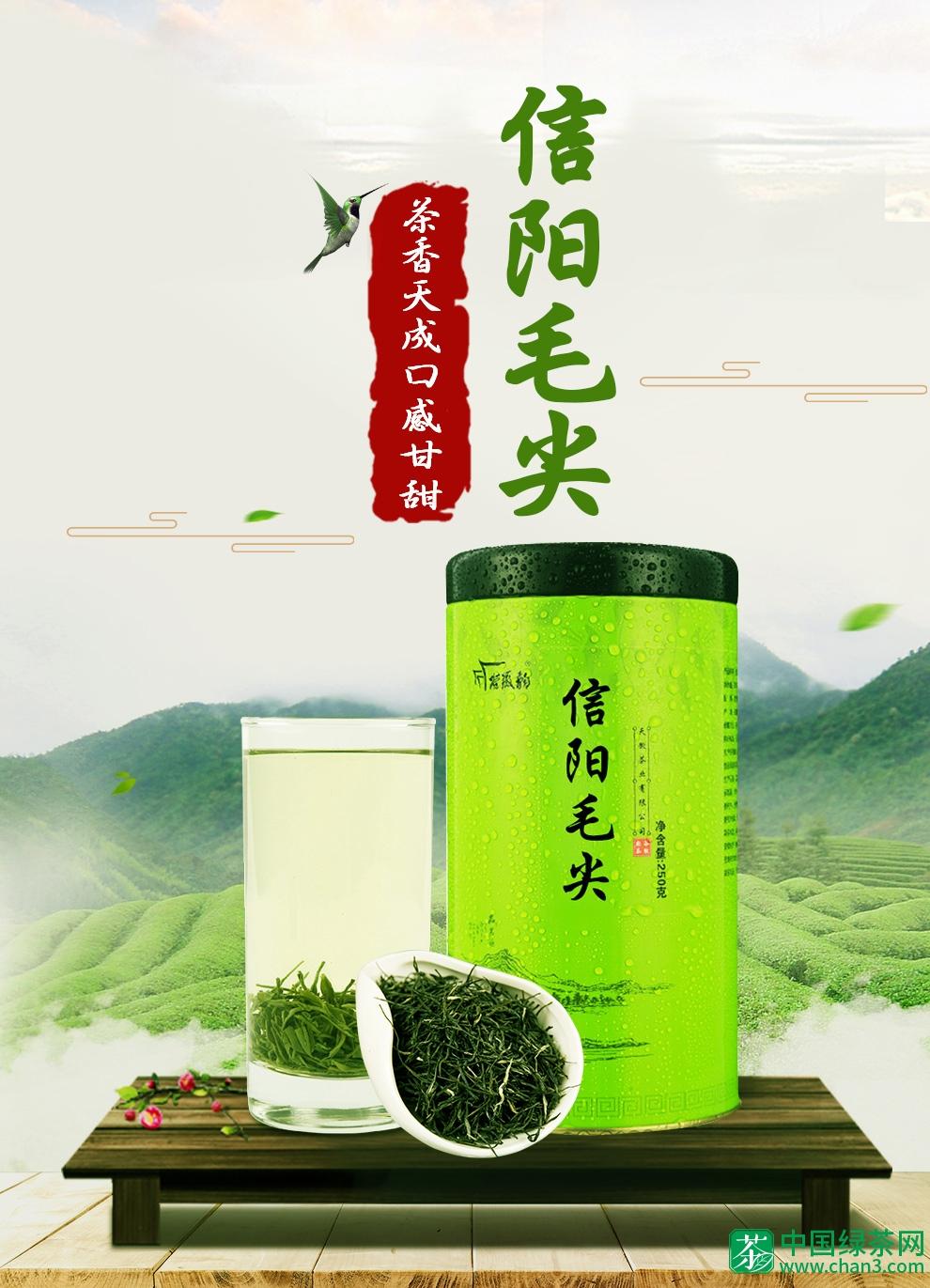 谷徽韵信阳毛尖特级绿茶毛尖春茶250g新茶茶叶
