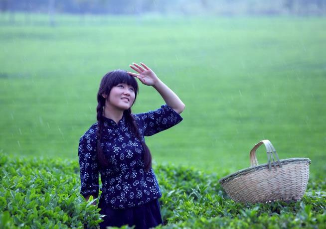 最能占领外国市场的茶叶安徽祁门红茶