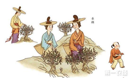 祁门红茶的制作方法|红茶制作工艺流程揭秘
