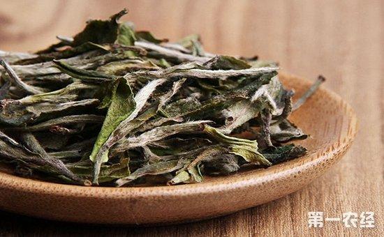 白牡丹茶叶的功效有哪些?白牡丹茶叶的功效与作用