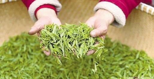 西湖龙井明前茶和雨前茶该如何区分?