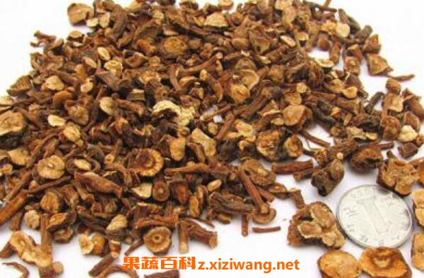 蒲公英根红茶的功效与作用蒲公英根泡红茶的功效