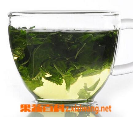 桑叶茶的泡法与功效