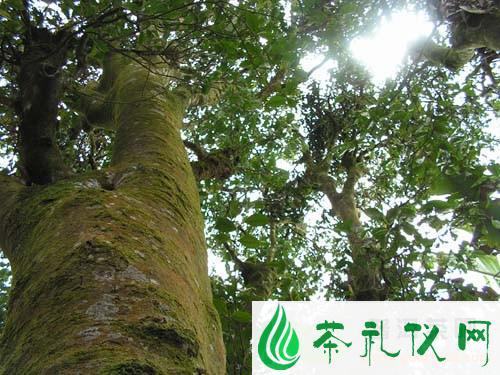 云南普洱茶六大产区的划分及特点