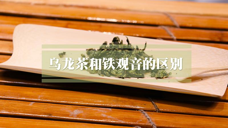乌龙茶与铁观音的区别