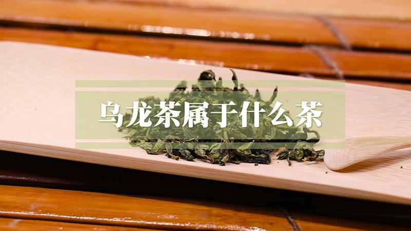 乌龙茶属于什么茶?