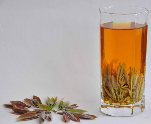 老鹰茶可以每天喝吗
