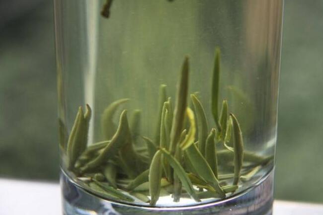 一起来学茶知识之关于金山翠芽的发展