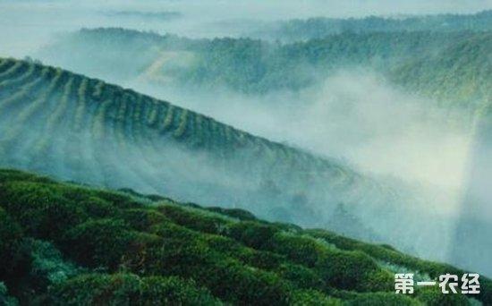 茶故事:庐山云雾茶的故事传说
