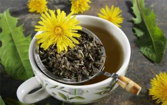 蒲公英茶的功效与作用及禁忌,蒲公英茶对女性的作用