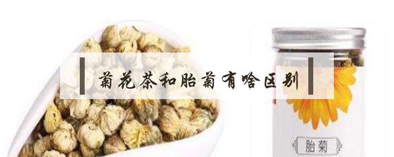菊花茶和胎菊有啥區別