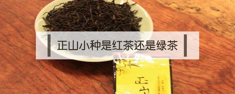 正山小种是红茶还是绿茶