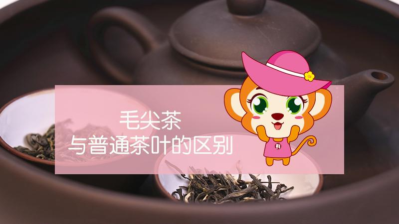 毛尖茶与普通茶叶的区别
