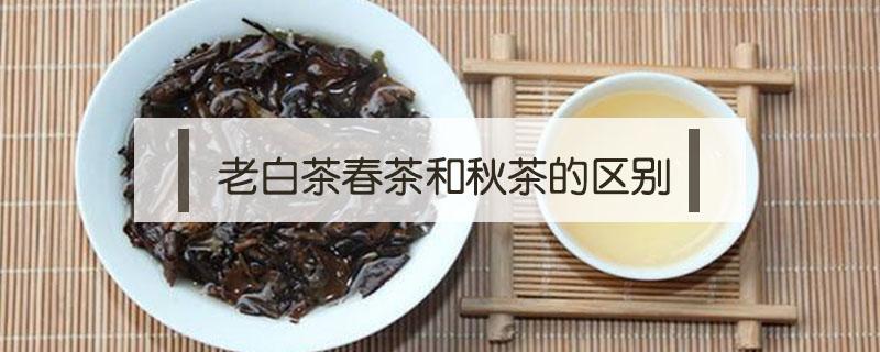 老白茶春茶和秋茶的区别