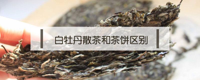 白牡丹散茶和茶饼区别