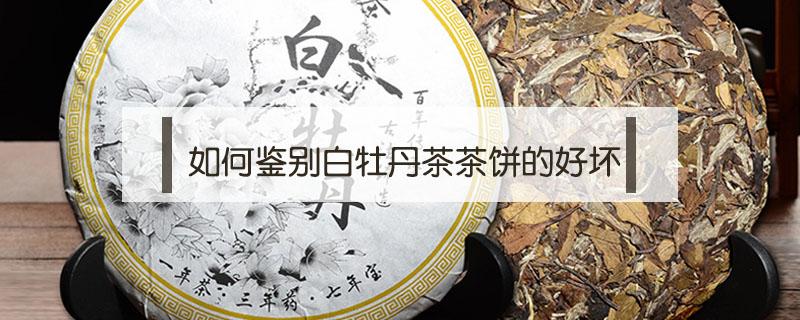 如何鉴别白牡丹茶茶饼的好坏