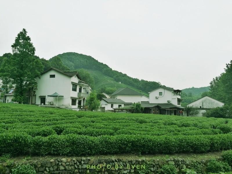 如何买到正宗龙井茶,怎么买龙井茶,怎样正确选购西湖龙井