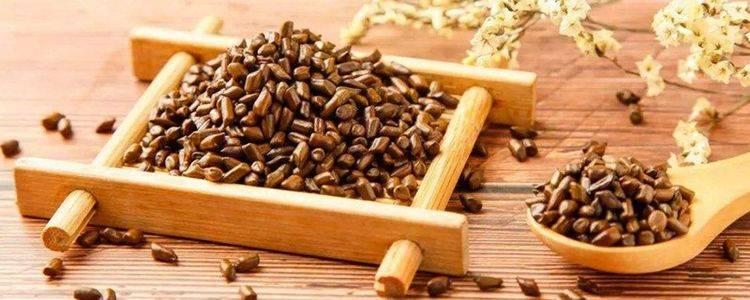 决明子茶的功效与作用及禁忌