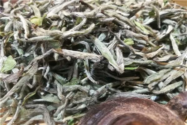老白茶是凉性还是热性