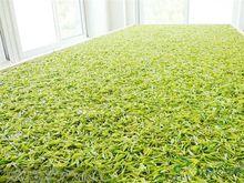 天目湖白茶原产地 天目湖白茶的特征