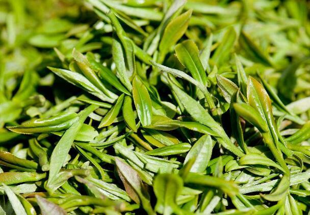 喝菊花茶竟然也有坏处 哪些人不能喝菊花茶
