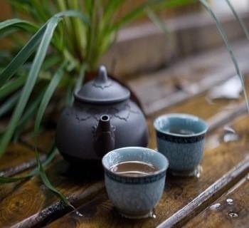 白茶的品种