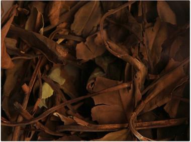 寿眉白茶的产地