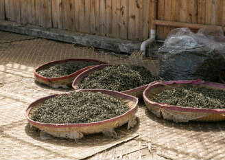 绿茶的种类