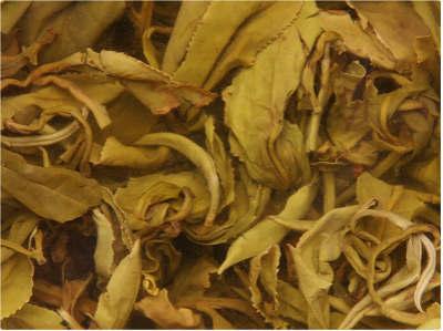 关于百合花茶的药用价值