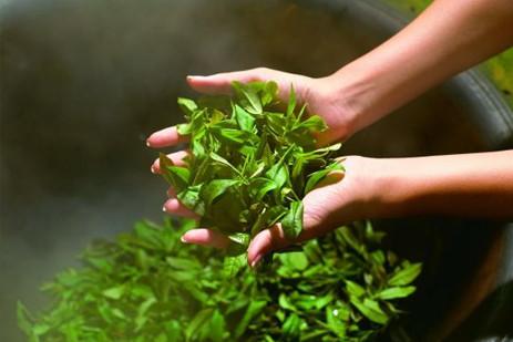 绿茶碧螺春有减肥效果吗