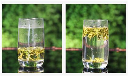 讨论日照绿茶尚茶价格