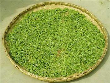 永川秀芽是绿茶