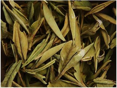 白牡丹茶制作工艺