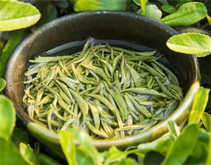 竹叶青茶叶的功效