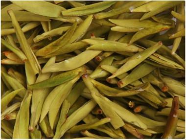 黄茶的盖碗泡法