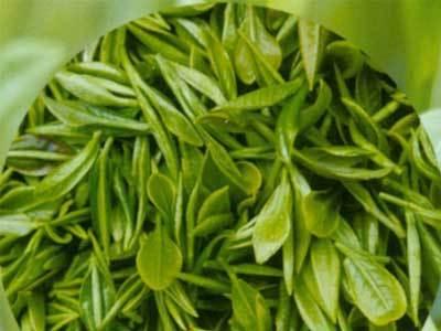 崂山绿茶的功效与作用有哪些