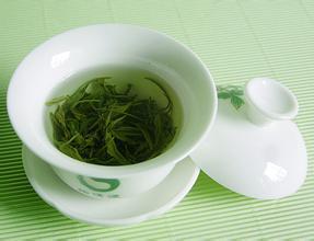 毛尖属于什么茶?