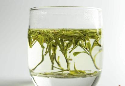 泡绿茶用什么杯子最好